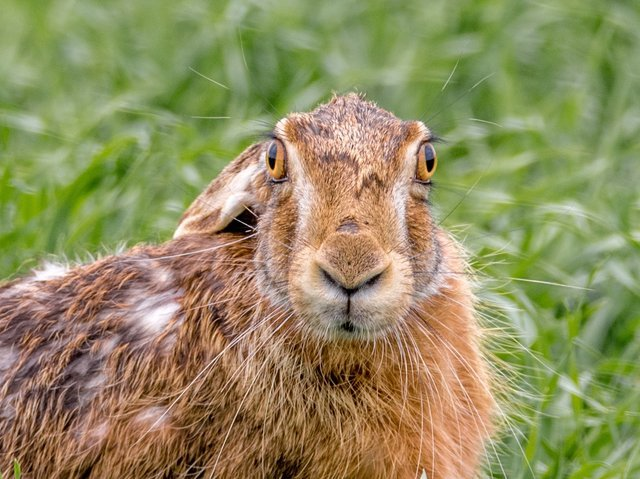 hare-field-2246752