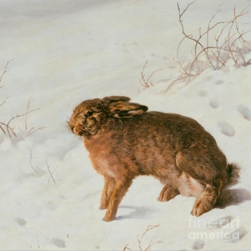 cropped-hare-in-the-snow-celestial-images